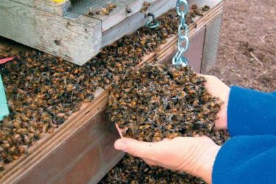 2021060307215570515_bee-death.jpg