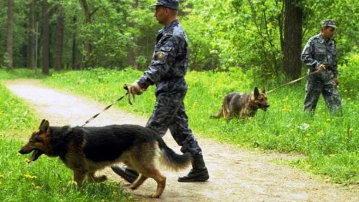 v-nizhegorodskoy-oblasti-4-letniy-rebenok-propal-v-lesu_1.jpg